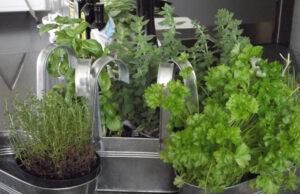Plantas saudáveis