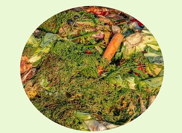 Evitando o desperdicio de comida