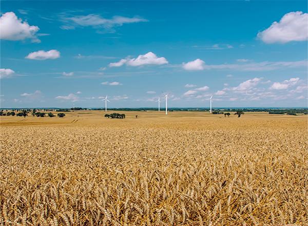 Sustentabilidade: Em 2020, mais de 20 mil toneladas de cascas de arroz viraram energia elétrica