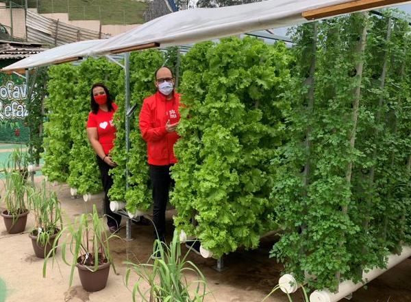 Fazenda Urbana de Paraisópolis produz mais de 500kg de hortaliças
